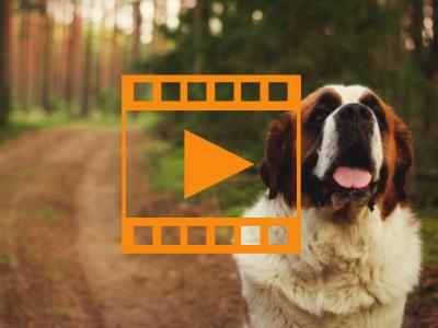 Peripheral Pulse Palpation vs. Doppler SAP in Dogs