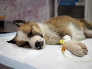 Infectious-Diseases-in-Small-Animal-Practice-optimized