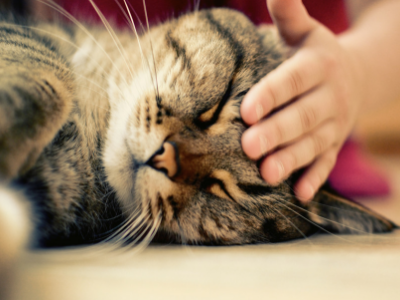 Nutritional Support of Dogs and Cats with Cancer