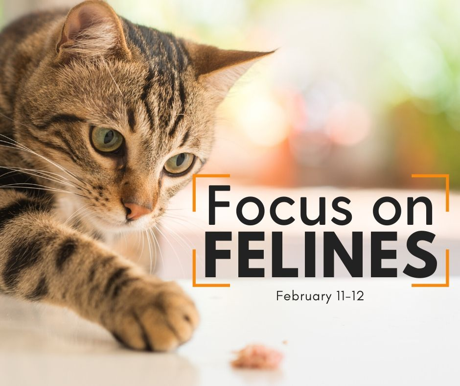 Focus on Felines