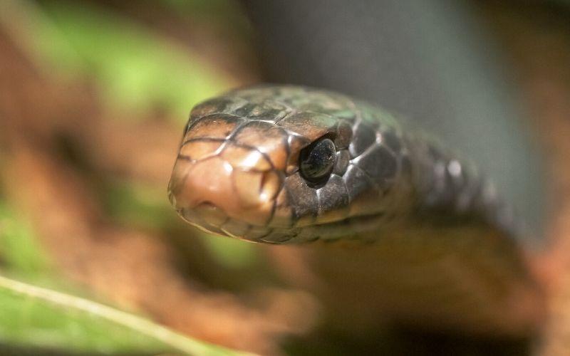 australia-dangerous-snakes-book-review