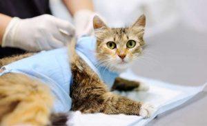 feline-emergencies-2020