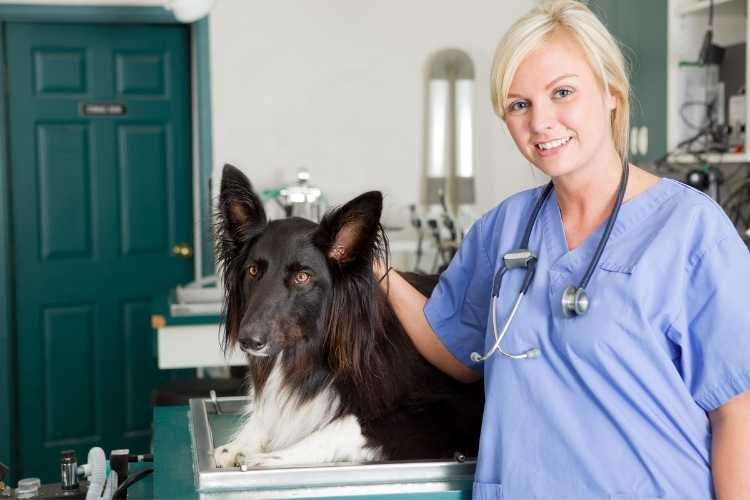 colourful-cpd-vet-nurse-course-3