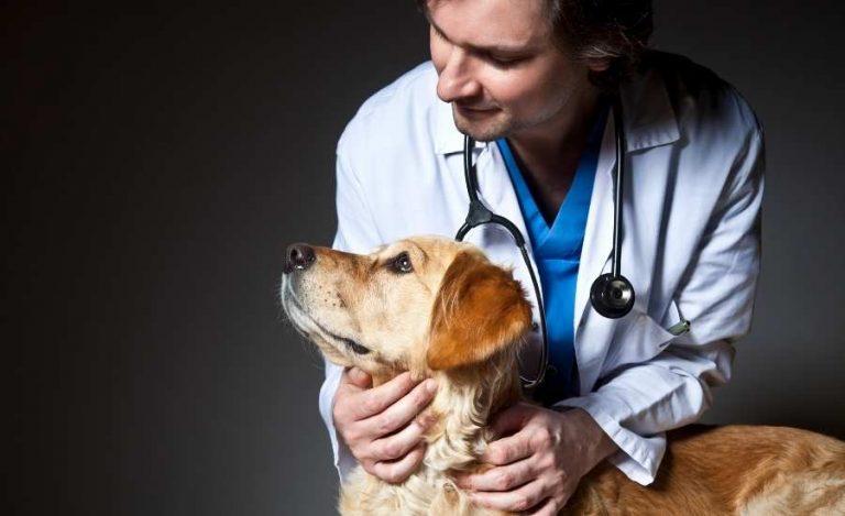 Gallbladder-Mucocoeles-Dogs