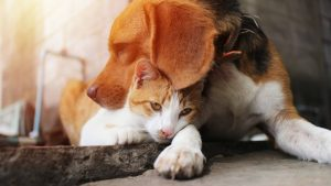 Hypotensive-Resuscitation-in-the-Dog-and-Cat